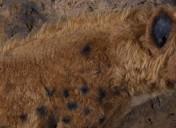 Eli y el animalito enfurecido